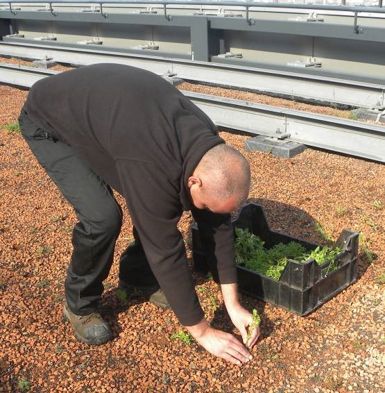 green roofing substrate