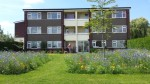 Social housing and wildflowers 3