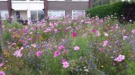 social housing and wildflowers 2b