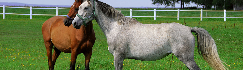 Grazing, Gallop & Racecourse Seed Mixtures – A New and Improved Range for 2015!