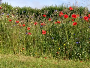 British Flora Annuals Wildflower Seed Mix