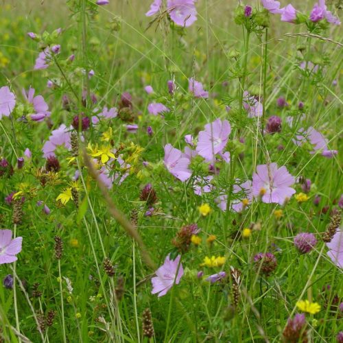 Wildflower and Grass Mixtures
