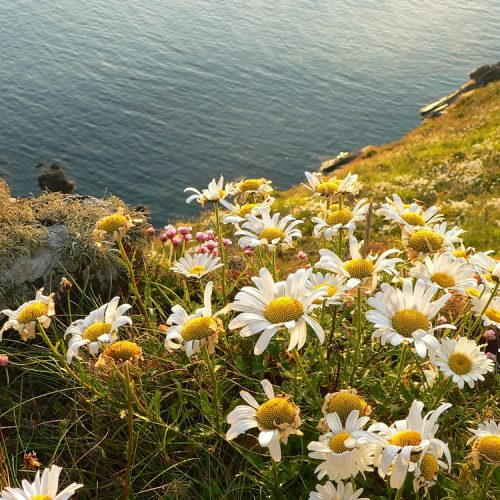BFS 11 Coastal Area Wildflower Seed Mix