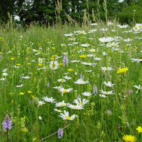 BFS 10 - Species Rich Wildflower Seed Mix