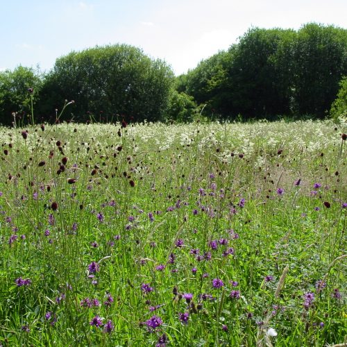 BFS 9 - Country Meadow Wildflower Mix