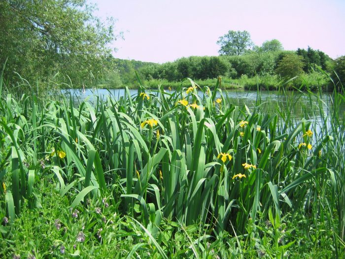 BFS 5 Wetland Pond Edge Wildflower Seed Mix