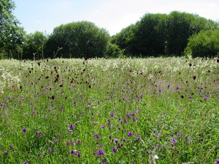 BFS 9 - Country Meadow Wildflower Mix